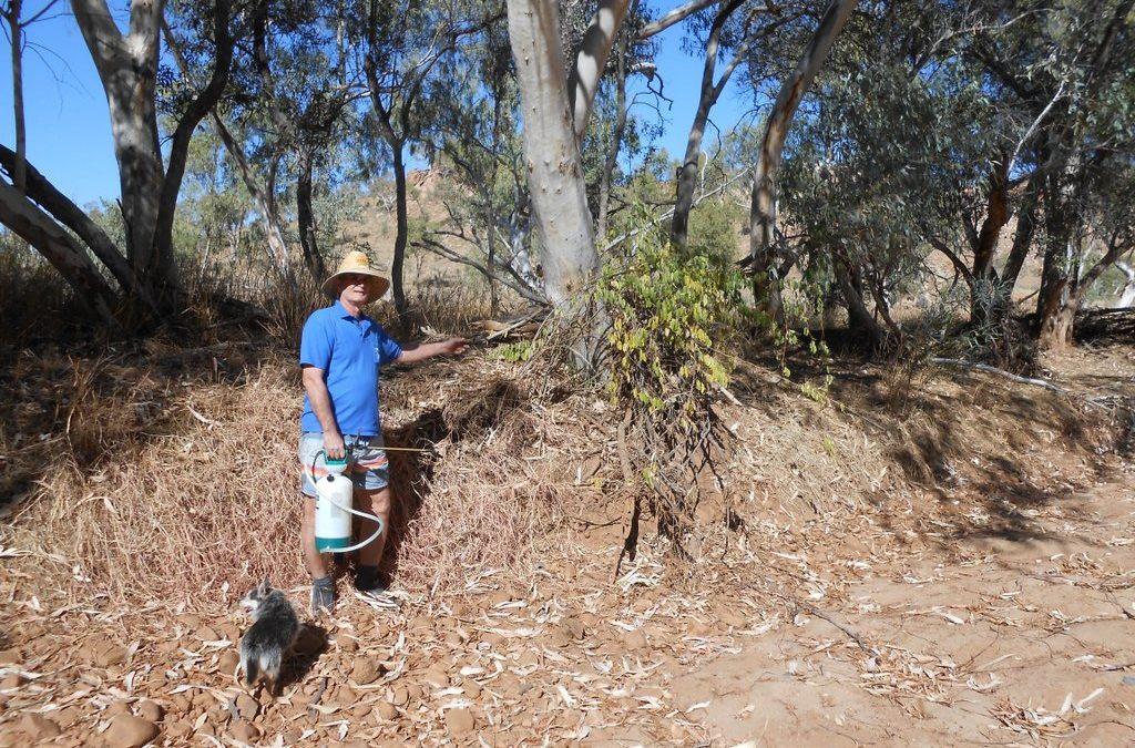 Walking Gorge Creek Spotting Rubber Vine