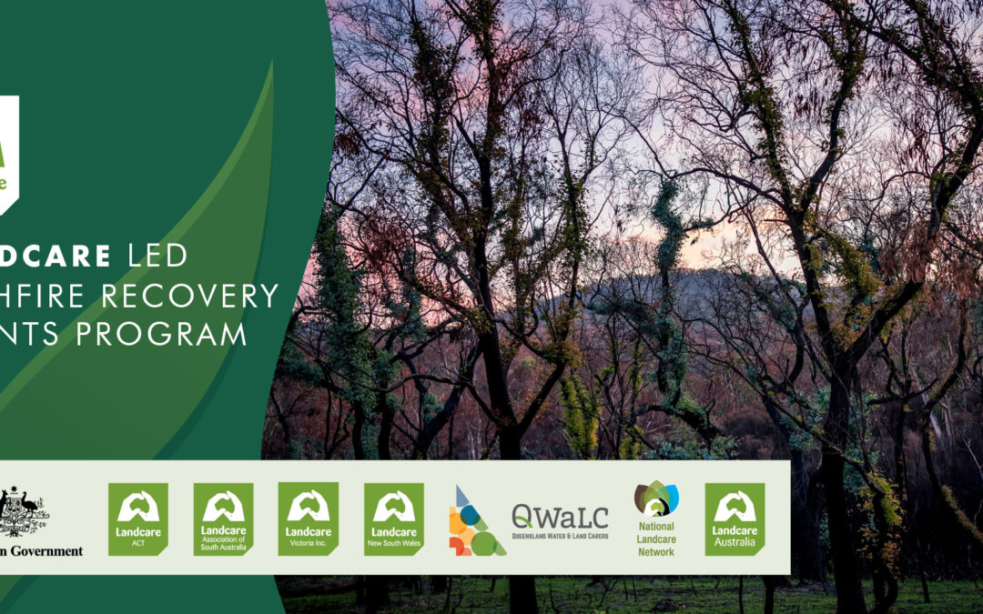 QWaLC welcomes $14 million for post-Black Summer bushfire recovery grants to support regeneration and community resilience